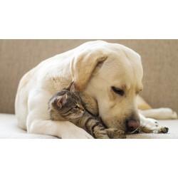 Είδη Ζώων Συντροφιάς